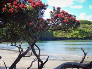 Neuseelandreise für Entdecker